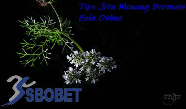 Tips Jitu Menang Bermain Bola Online
